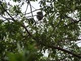 無料の区間から見たコアラです。