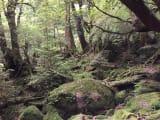 もののけ姫で有名な白谷雲水峡の苔むす森