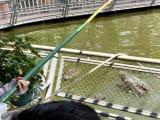 ワニ釣り体験