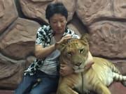 ライオンとトラの子です!