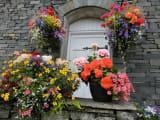 なんとも色鮮やかな花々