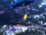 日本では見れない魚が沢山いました!