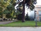 美術館外の街路樹