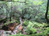 「苔むす森」じゃなくても、至るところ「苔むす森」と言える美しい原生林
