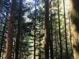 森林浴できました