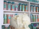フォトジェニックなアイスクリーム屋さん