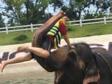象が遊んでくれました