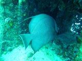 カリブ海でしか見られない魚もたくさん