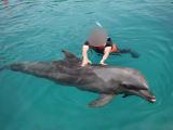 イルカに触れることができる最高の時間!