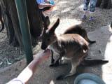 フェザーデール自然動物園