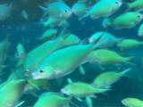 これ、水族館じゃないよ。パンをあげると魚が沢山近くに来ます。