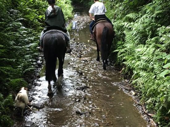 馬を水辺につれていけても水を飲ませることはできない