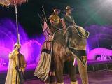 ショーの余興の一幕。像を間近でご覧あれ!