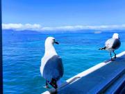 グリーン島(グラスボートにわたりどり)