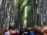 嵐山の竹林。イオンに癒やされます。