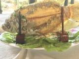 レストランで食べた川魚(像耳魚)