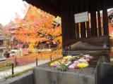 紅葉が美しいお寺です、入って左側の部屋で座禅をしました