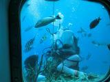 色とりどりの熱帯魚が