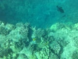 Underwater photo of the coral and some reef fish