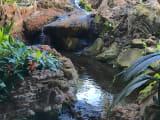 Beautiful streams