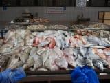 アブダビの魚市場見学も面白かった
