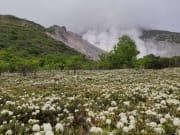 6月初正好碰到硫磺山前的滿地野花盛開。