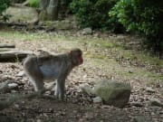 Mom and baby taking a stroll at the monkey park