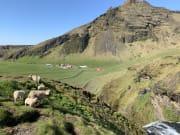羊たちががたくさんいました