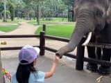 ゾウさんにエサもあげられます!