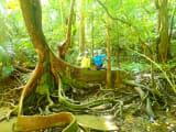 ジャングル〜
