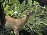 鹿に会えました