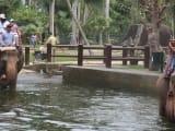 象がプールの中ものしのし歩きます。