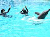 イルカと水中ダンスです。