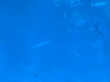 潜水艇の中から