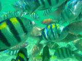 ナルスアンの浅瀬。ここも魚の餌貰えたので沢山の魚に囲まれました