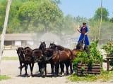 青い伝統衣装に身を包んだ牧童が5頭の馬を一人で操ります