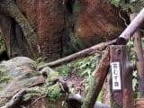 苔むす森入口付近 切り株は猪みたいです
