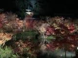 永観堂のライトアップ