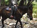 林(熱帯雨林?)を進みます。頭はヘルメットに長袖シャツ、ズボンは登山用の長ズボンで、長靴姿です。