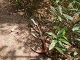 散策中、こんな素敵な落とし物も発見しましたよ。